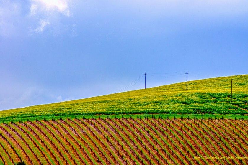 Raka-vineyard
