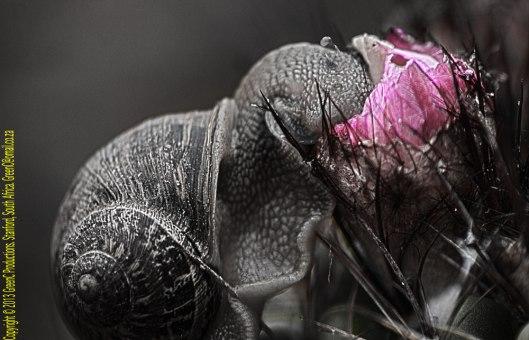 snailoncactus