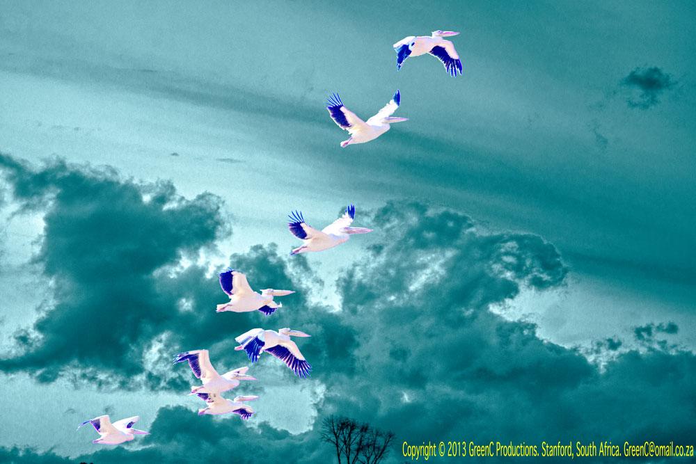 birdblend3