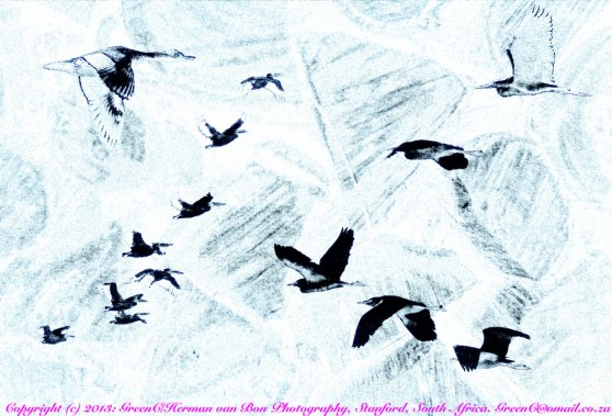 BirdsonFirewoodInvertedFresco