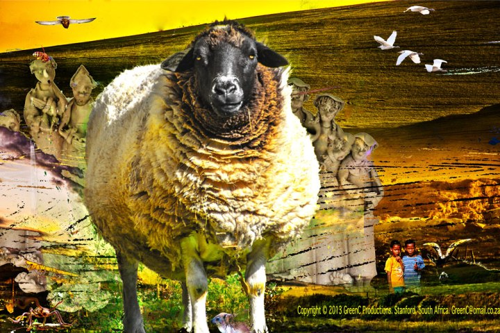 sheepinstanford