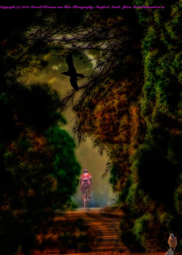 The-Cyclist