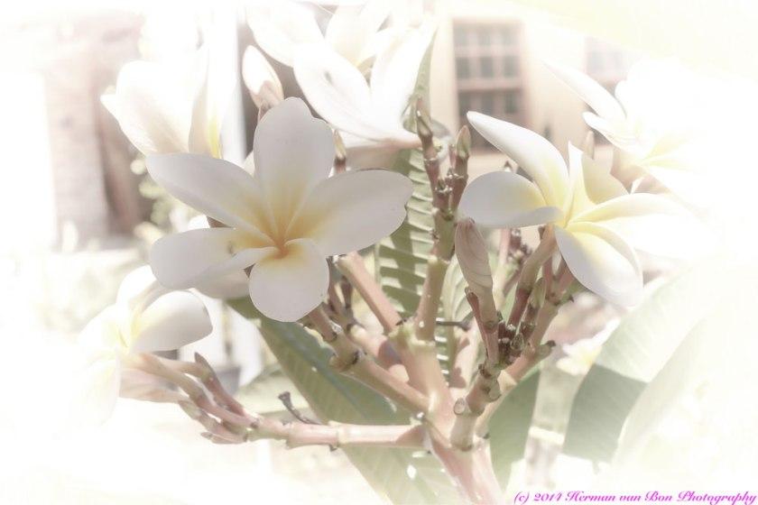 Romancing-flowers