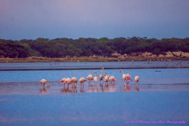 FlamingoBreakfast