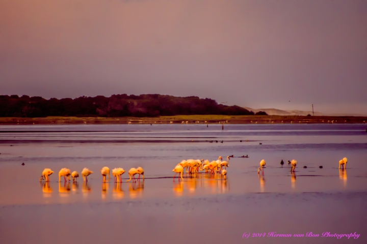 FlamingoBreakfast2
