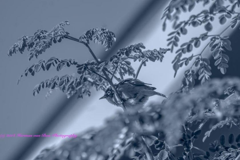 birdintree15march14