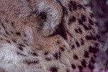 cheetahEC2