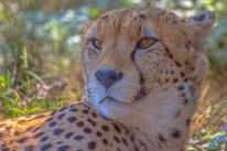 CheetahEC9