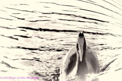 duck13june14-3