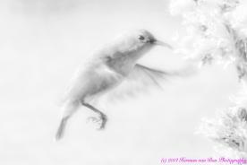 10bird_DxO