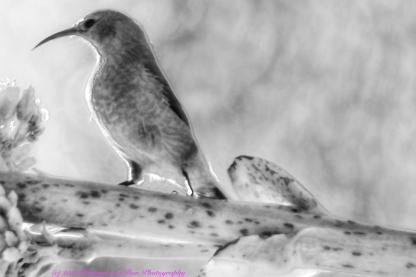 4bird-exposure_DxO