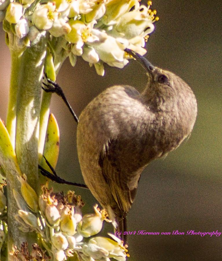5bird