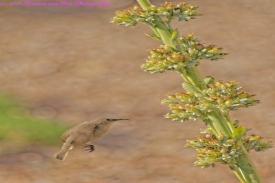 bird15_DxO