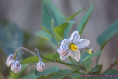 blom4