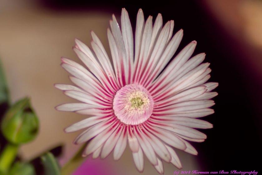 blom7