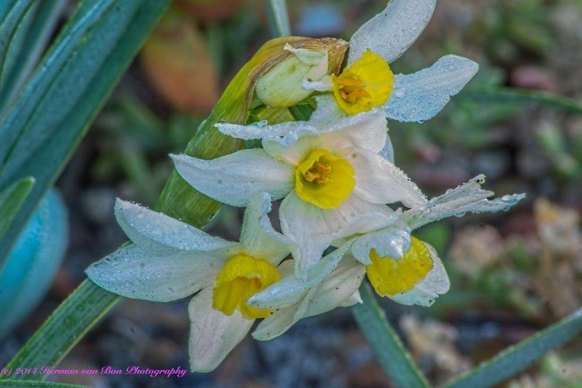 flower28june14-1