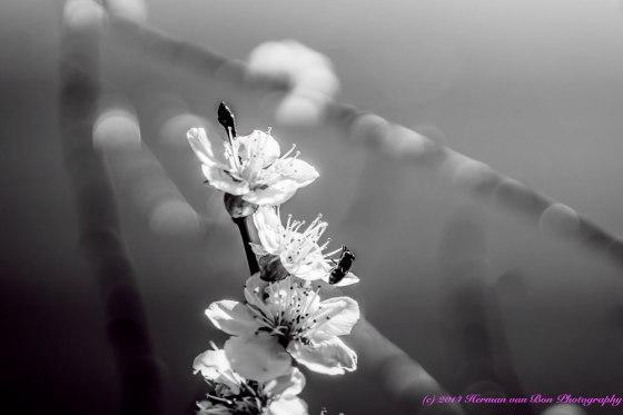blossom31aug14-1