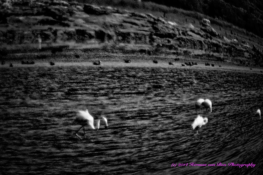 FlamingosInTheDark