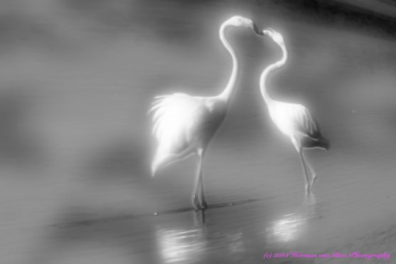 flamingosinthemist3