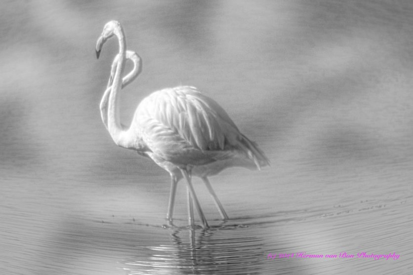 flamingosinthemist4