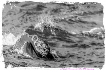 Whale3aug14-1