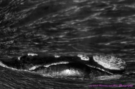 whale3aug14-2_DxO