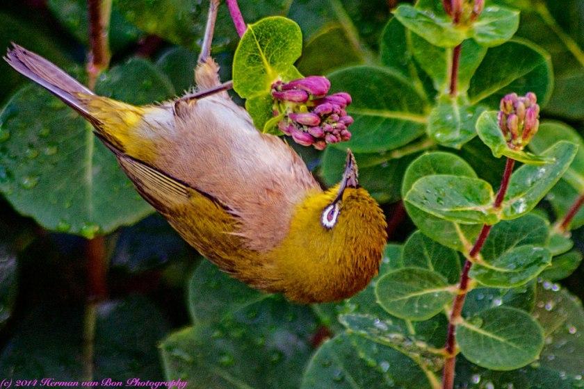 bird27sept14-1