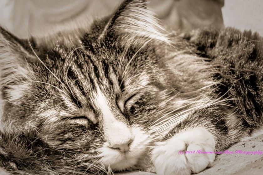 Dream-Cat