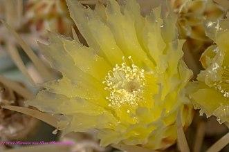 flower12sept14-2