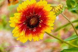 flower8sept14