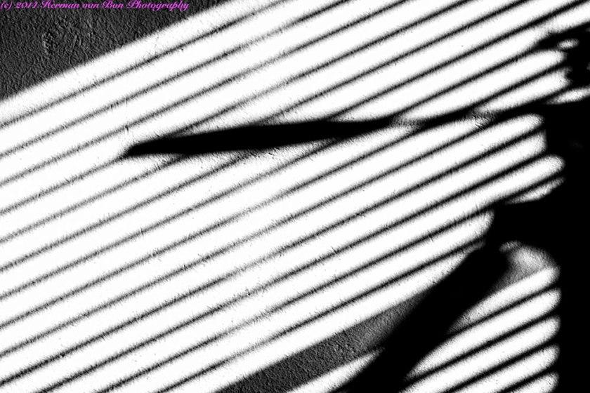 shadowfight