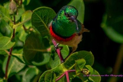 SUNdayBIRD1