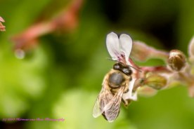 BusyBee29aug14