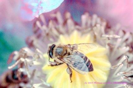 poppybee1