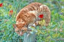 cat on pole