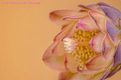 flower27july14