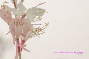 flower29oct14-1