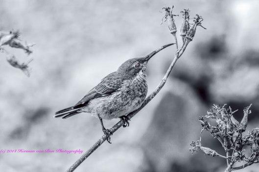 sunbird20dec14-1