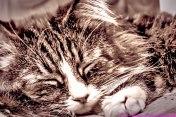 Dream-Cat_edit