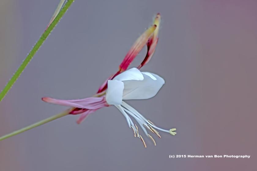 flower17jan15