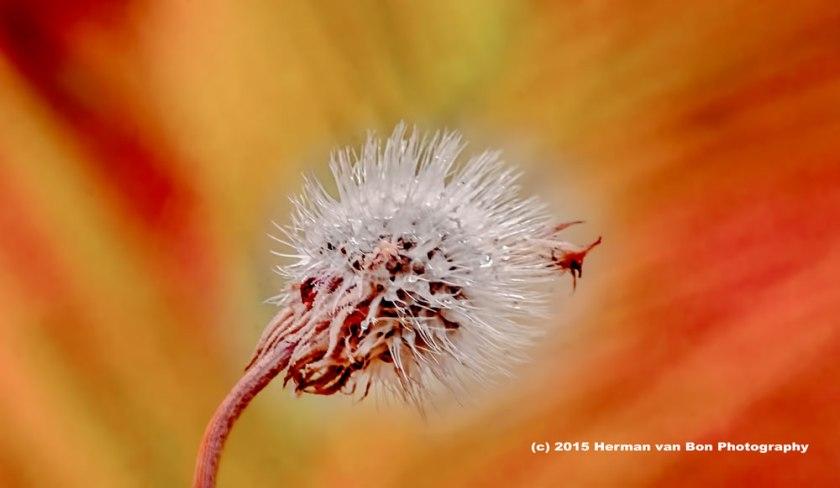 morningflower13jan1