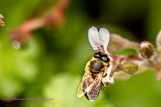 BusyBee29aug14_edit