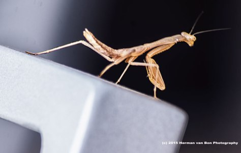 mantis Herman van Bon Photography