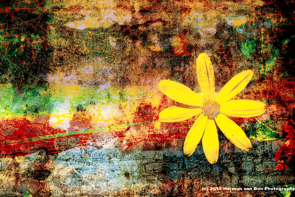wall-flower-revisited