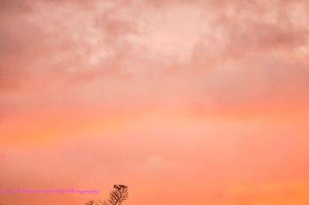 sunset3dec14-1