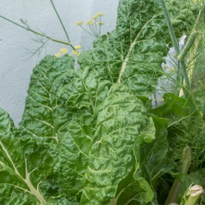 Y-herbs