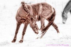 horse1aug14_DxO_edit