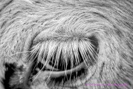 Bull'sEye1