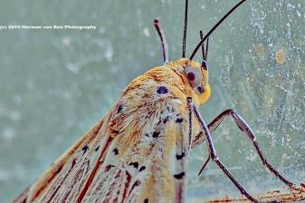 eyesofabutterfly12jan15