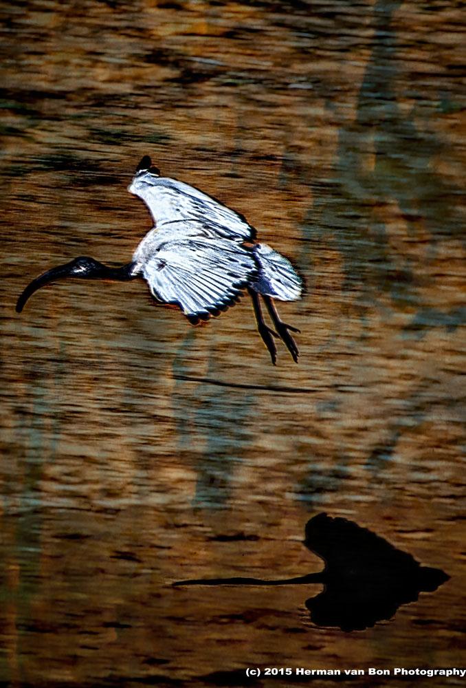 shadow-flying-edited